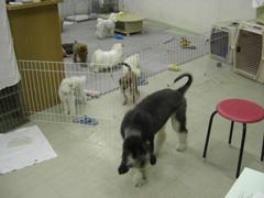 「ワンコ保育園①」_c0126766_21502115.jpg