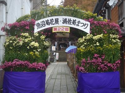 第22回魚沼菊花展浦佐菊まつり審査会_b0092684_17242484.jpg