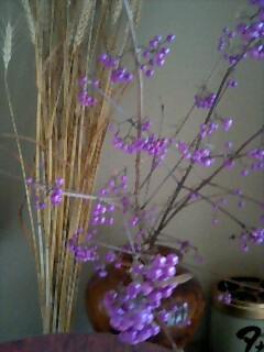 紫式部_d0027486_6581799.jpg