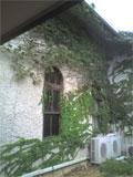 b0019909_1658837.jpg