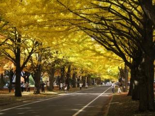 北海道大学_a0023246_139436.jpg