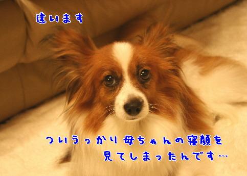 d0013149_0385339.jpg