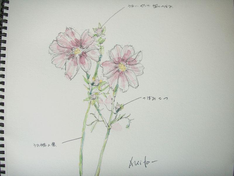 淡彩 スケッチ    ・  住まいと 花・植栽 の話_e0106975_1221340.jpg