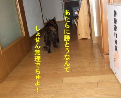 b0087400_03636.jpg