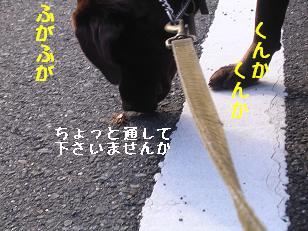 b0113725_134716.jpg