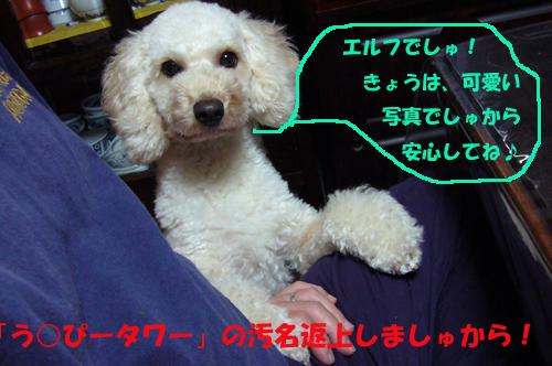 d0070047_2114519.jpg