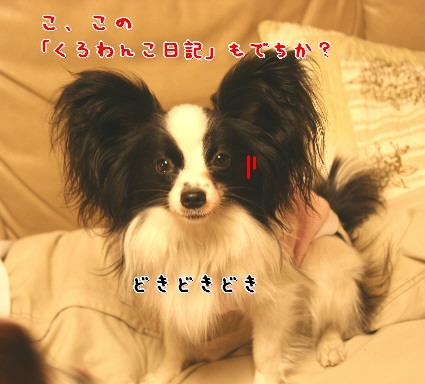 d0013149_130711.jpg