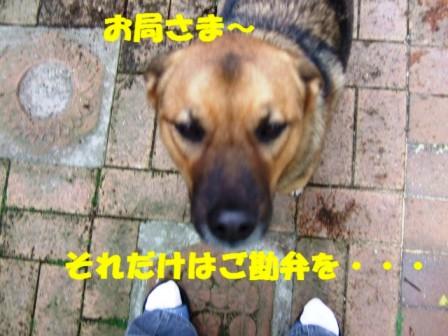 b0087400_010674.jpg