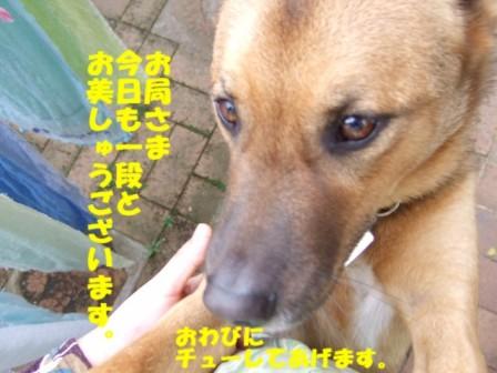 b0087400_014207.jpg