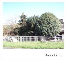 b0120001_6413243.jpg