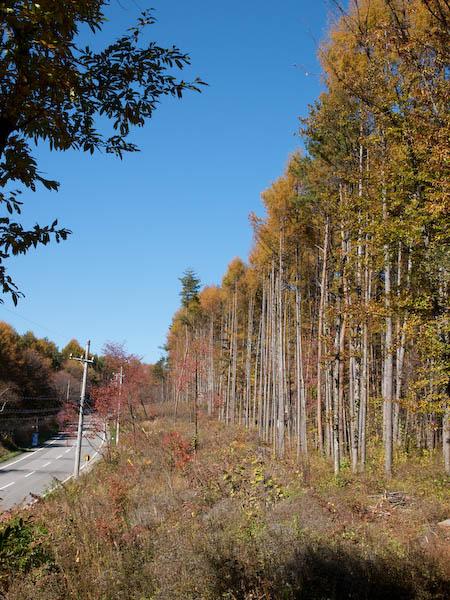 秋たけなわの富士見高原と原村_c0137403_19222449.jpg
