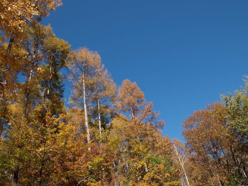 秋たけなわの富士見高原と原村_c0137403_1963414.jpg