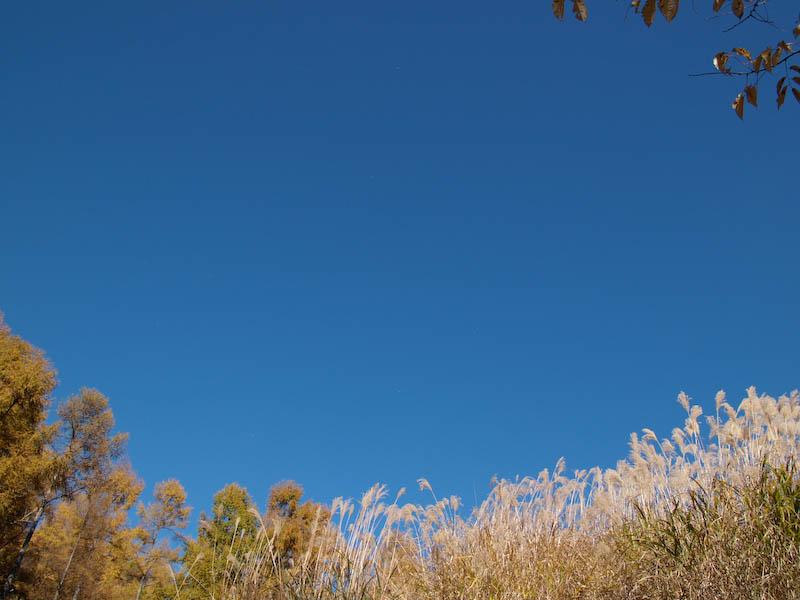 秋たけなわの富士見高原と原村_c0137403_1971331.jpg