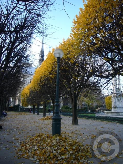 ■PHOTO秋のノートルダム(パリ)_a0008105_100414.jpg