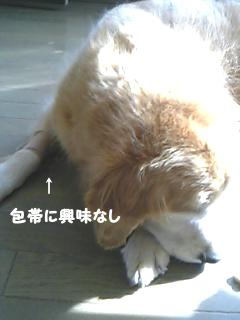d0020136_1271690.jpg