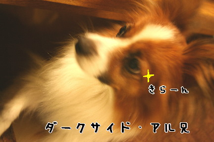 d0013149_1161380.jpg