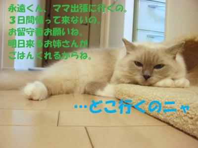 f0014893_1340535.jpg
