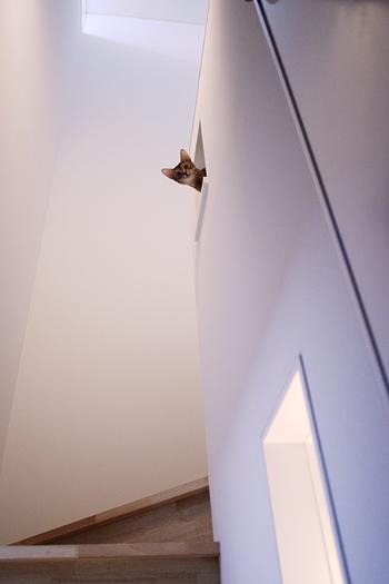 [猫的]光を変えてみる_e0090124_854871.jpg