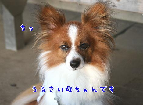 d0013149_1391445.jpg