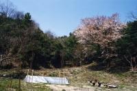 H19年「「山桜テーブル」お披露目パーティー」_c0108460_20162949.jpg