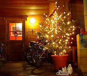 クリスマスツリー _c0123363_1124488.jpg