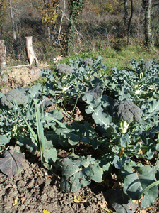 秋の収穫のポイントは8月末_f0106597_1438167.jpg