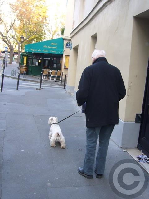 ■街角のワンコたち(パリ)_a0008105_895765.jpg