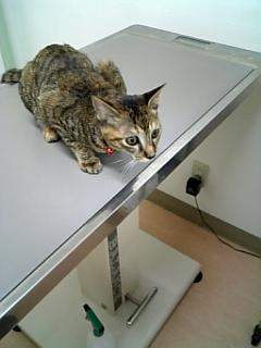 動物病院へ_c0103712_16131956.jpg
