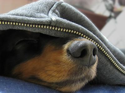寝てたんかいっ!