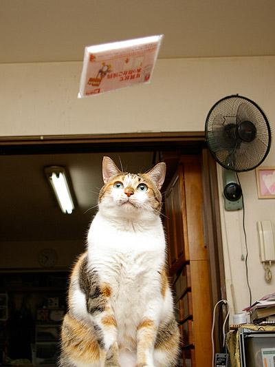 猫らが飛ばないので・・・_a0028451_0181756.jpg