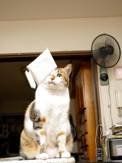猫らが飛ばないので・・・_a0028451_0183479.jpg