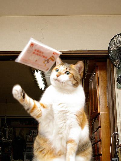 猫らが飛ばないので・・・_a0028451_0184990.jpg