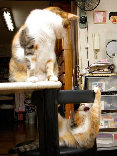 猫らが飛ばないので・・・_a0028451_0192536.jpg