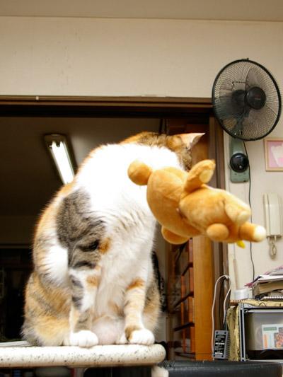 猫らが飛ばないので・・・_a0028451_019361.jpg
