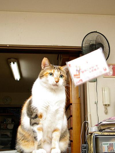 猫らが飛ばないので・・・_a0028451_121639.jpg