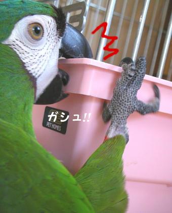 f0132055_2227593.jpg
