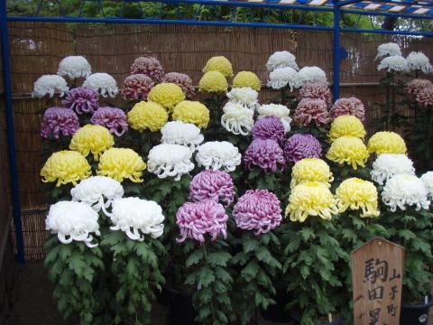 福山城_a0077071_15542080.jpg