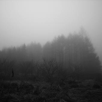 幻想的な霧_b0038585_179134.jpg