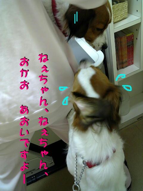 c0075585_1233569.jpg