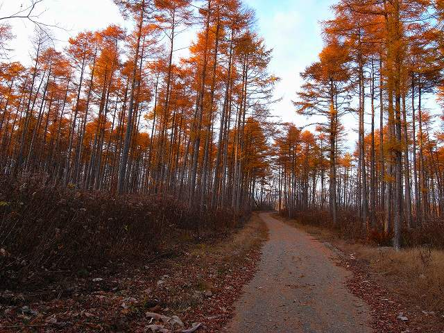 晩秋の青葉公園_f0138096_17464185.jpg