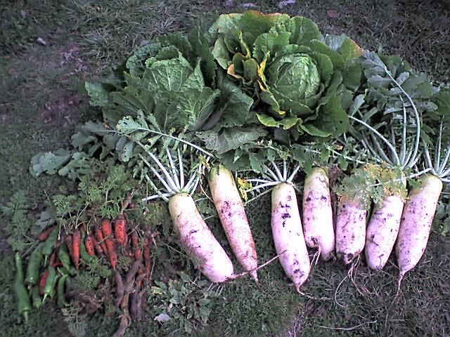 農園で収穫_c0125702_23275927.jpg