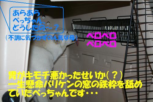 f0121712_16254577.jpg