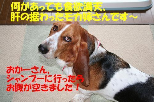 f0121712_16255924.jpg