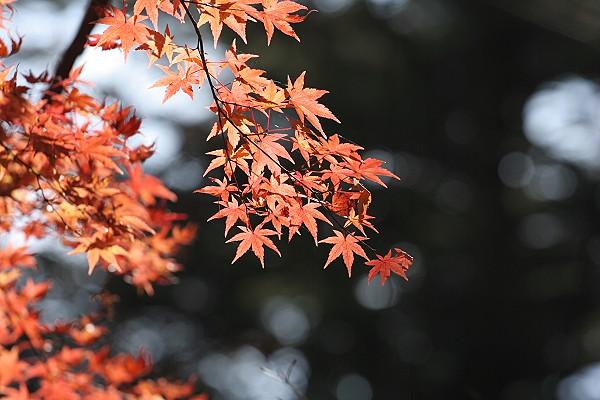軽井沢 3_d0026817_2275249.jpg