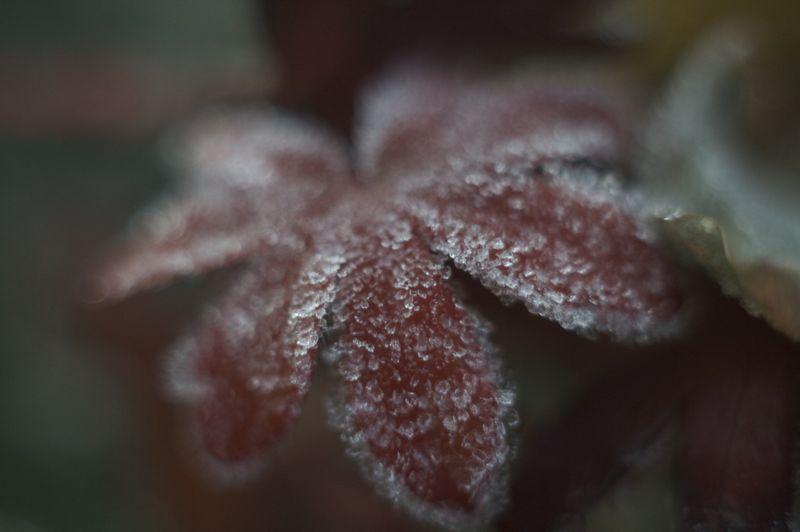 霜降る庭_f0042194_21322177.jpg