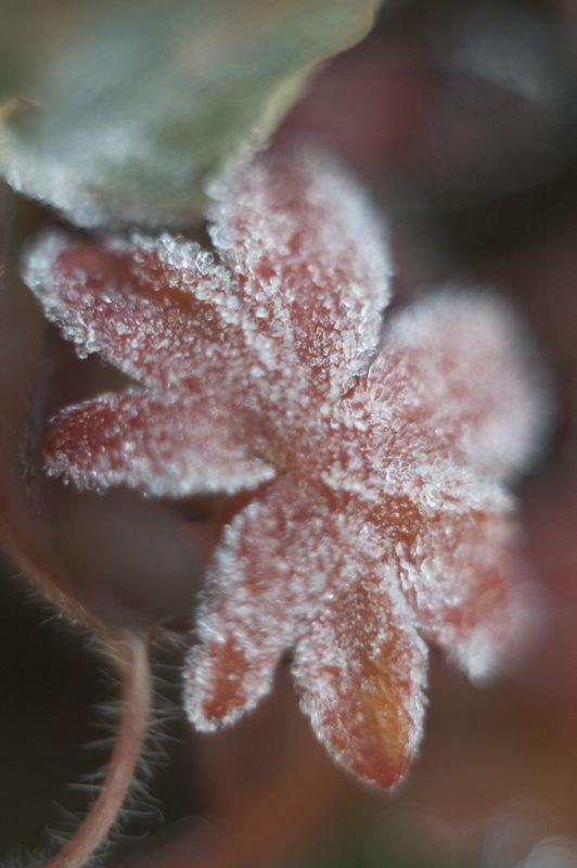 霜降る庭_f0042194_21331314.jpg