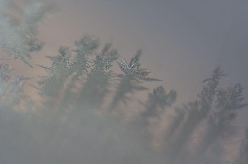 フロントガラスに樹氷_f0042194_21363072.jpg