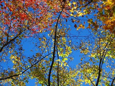 ひらひらと紅葉が・・_b0100229_13105227.jpg