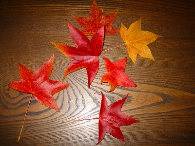 ひらひらと紅葉が・・_b0100229_13153970.jpg