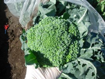 収穫日和_e0097534_15461167.jpg